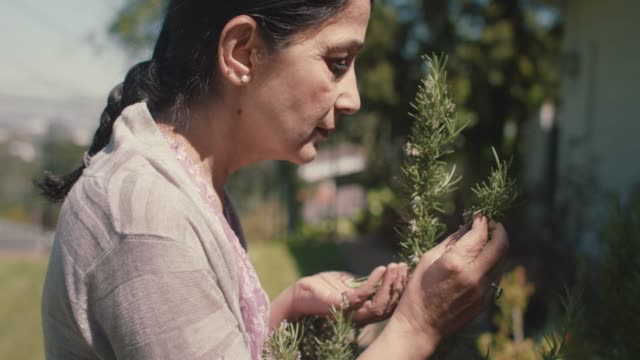 mature woman picking rosemary in her front yard - ローズマリー点の映像素材/bロール
