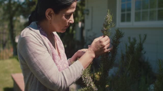 mature woman picking rosemary in her front yard - after work stock videos & royalty-free footage