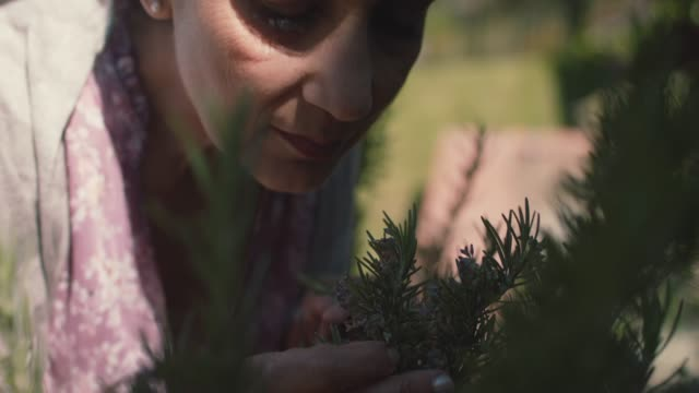 vídeos de stock, filmes e b-roll de mature woman picking rosemary in her front yard - feminidade