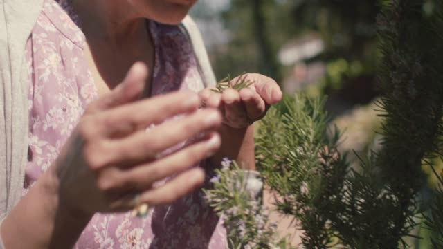vídeos y material grabado en eventos de stock de mature woman picking rosemary in her front yard - jardinería