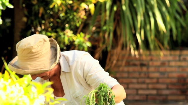 stockvideo's en b-roll-footage met mature woman picking up root vegetables in the garden / cape town, western cape, south africa - alleen één oudere vrouw