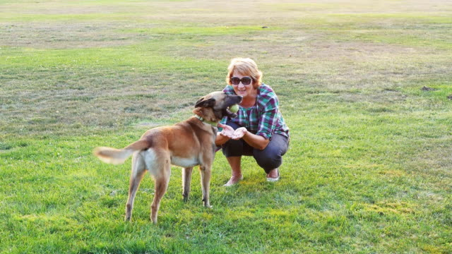 mature woman playing with her cheerful belgian shepherd dog - overweight dog stock videos & royalty-free footage