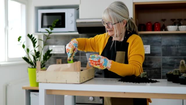 vídeos de stock e filmes b-roll de mature woman potting plants for indoor garden - colocar planta em vaso