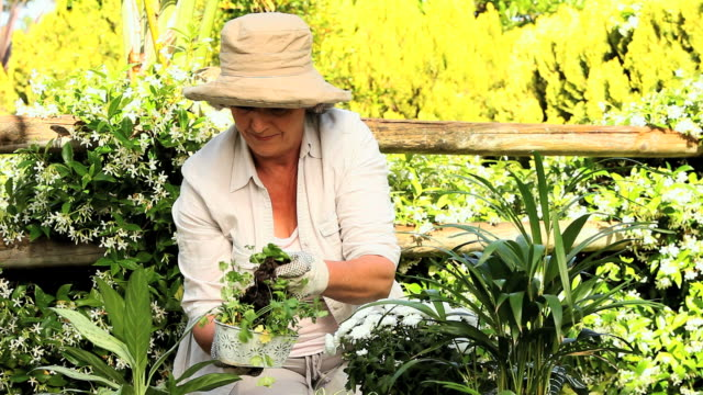 mature woman potting plants in the garden / cape town, western cape, south africa - one mature woman only stock videos & royalty-free footage