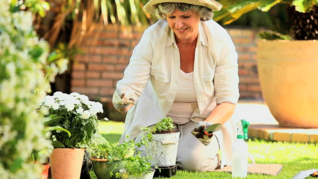 stockvideo's en b-roll-footage met mature woman potting plants in the garden / cape town, western cape, south africa - alleen één oudere vrouw