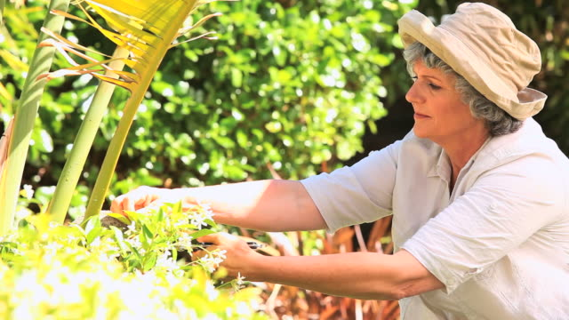 mature woman pruning a shrub / cape town, western cape, south africa - secateurs stock videos & royalty-free footage