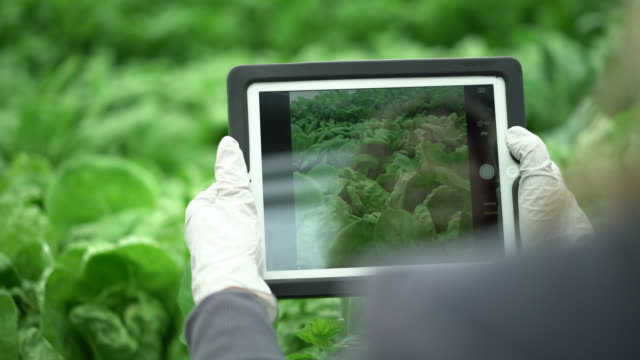 CU POV Mature woman using a digital tablet  in a hydroponic farm