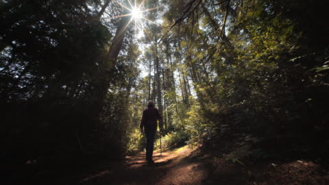 mature woman walking in forest, bandon, or - footpath stock videos & royalty-free footage