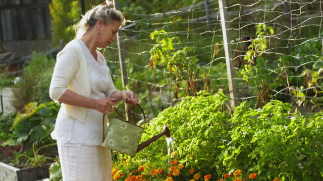 MS Mature woman watering flowers in domestic garden / Dorset, Vermont, USA