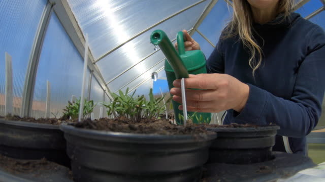mature woman watering seedlings in greenhouse - watering can stock videos & royalty-free footage