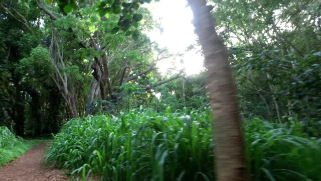 Maui Tropical Waldweg auf Insel