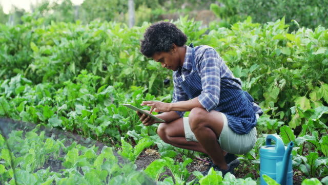 maximizing his yields with mobile apps - self sufficiency stock videos and b-roll footage