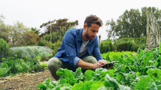 maximizing his yields with mobile apps - vegetable garden stock videos & royalty-free footage