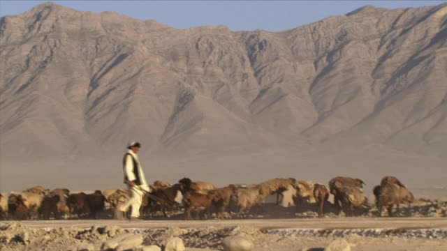 may 1, 2009 herder guiding sheep / bagram, afghanistan - herd stock videos & royalty-free footage
