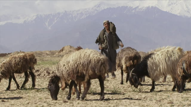 may 1, 2009 teenage herder with goats / bagram, afghanistan - one teenage boy only stock videos & royalty-free footage