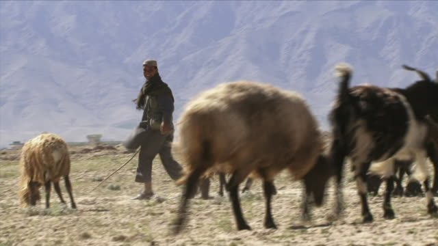 may 1 2009 ws pan teenage herder with goats in pasture / bagram afghanistan - shepherd stock videos & royalty-free footage