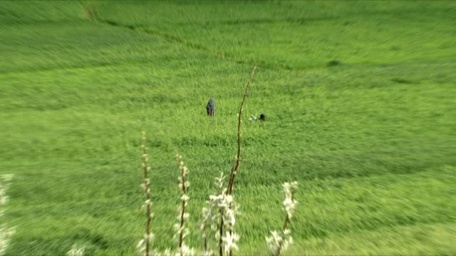 may 18 2009 ls ws zo ha woman working in plantation / panjshir valley afghanistan / audio - only mid adult women stock videos and b-roll footage