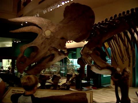 may 24 2002 zi children viewing a dinosaur exhibit at smithsonian / washington dc united states - smithsonian institution bildbanksvideor och videomaterial från bakom kulisserna