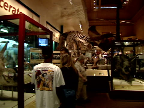 may 24, 2002 people viewing a dinosaur exhibit at the smithsonian museum / washington, d.c., united states - animal skeleton stock videos & royalty-free footage