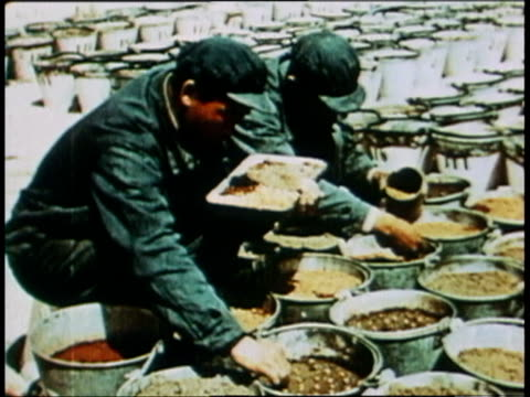 may 9 1966 men planting irradiated seeds after test explosion / china - 1966 stock videos & royalty-free footage