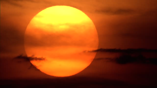 mayflies (ephemeroptera) fly past setting sun, yellowstone, usa - orange colour stock videos & royalty-free footage
