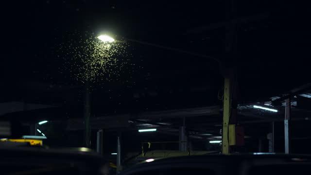 vidéos et rushes de mayfly sur le marché de nuit - éclairage public