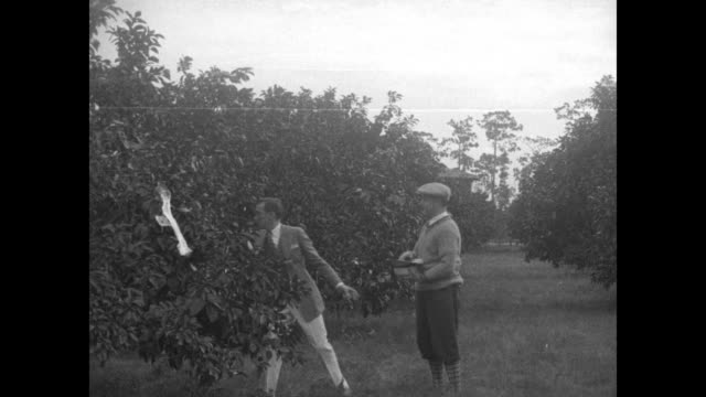 vídeos de stock e filmes b-roll de mayor-elect of new york city jimmy walker on left walking through orange grove with friend ; he stops, doffs his panama hat, and picks up a couple of... - bosque