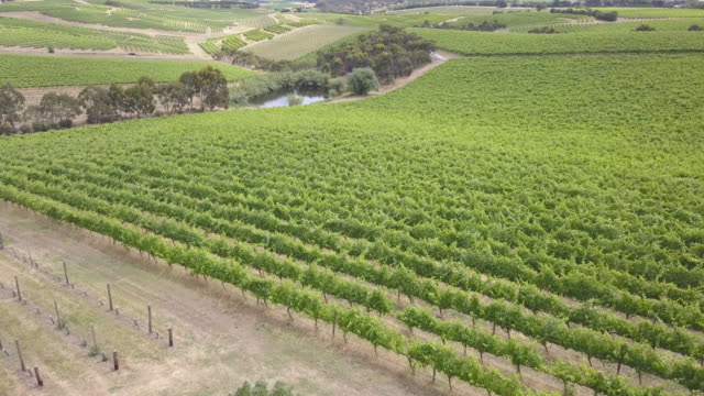 mclaren vale. south australia, australia - valley stock videos & royalty-free footage