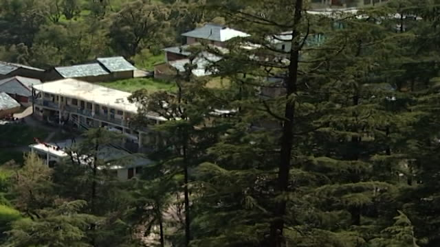 mcleod ganj. high-angle view of a cluster of houses on a hill surrounded by fir trees. - pinaceae stock videos & royalty-free footage
