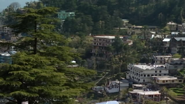 mcleod ganj. nestled amongst cedar trees mcleod ganj is the home of the dalai lama. hight angle pan-left to a view overlooking the kangra valley. - pinaceae stock videos & royalty-free footage