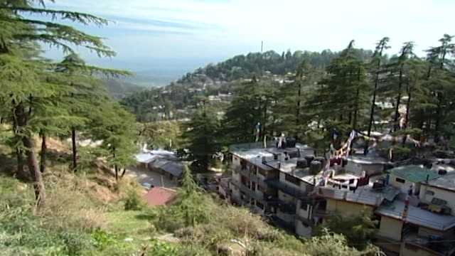 vídeos de stock e filmes b-roll de mcleod ganj. nestled amongst cedar trees mcleod ganj is the home of the dalai lama. hight angle view overlooking the kangra valley. - pinaceae