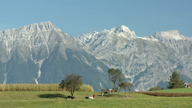 meadow and mountains - mittelgroße tiergruppe stock-videos und b-roll-filmmaterial