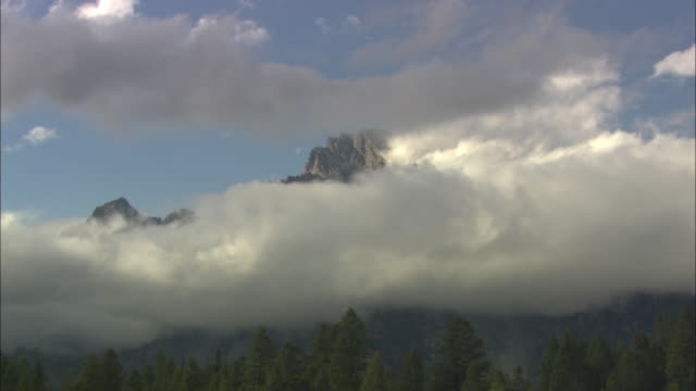 ws zi meadow and pine forest with teton mountains peak covered with clouds / grand teton national park, wyoming, usa - alm stock-videos und b-roll-filmmaterial