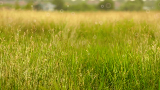 Meadow and soft breeze