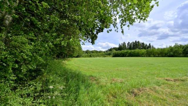 meadow at the edge of the forest in summer - woodland stock videos & royalty-free footage