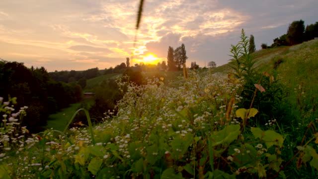 WS LA Prado flores no pôr do sol