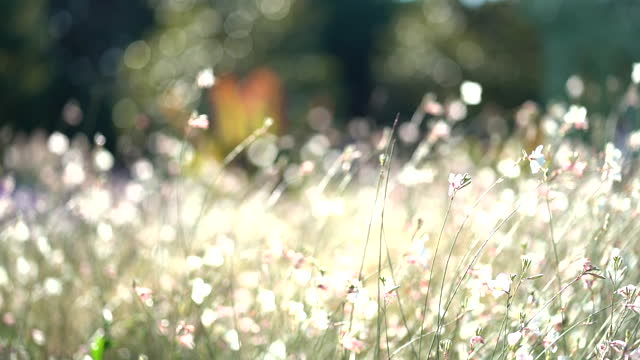meadow flowers sway in the wind - grass family stock videos & royalty-free footage