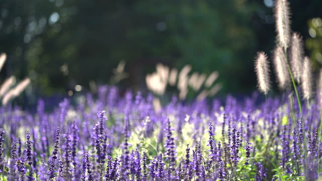 meadow flowers sway in the wind - meadow stock videos & royalty-free footage