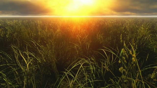 prato di erba - zona erbosa video stock e b–roll