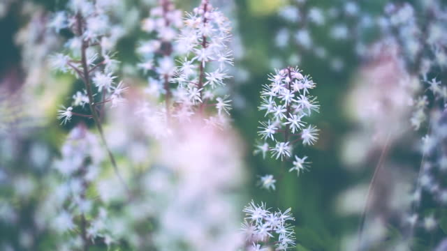 meadow in pastel tones - desaturated stock videos & royalty-free footage