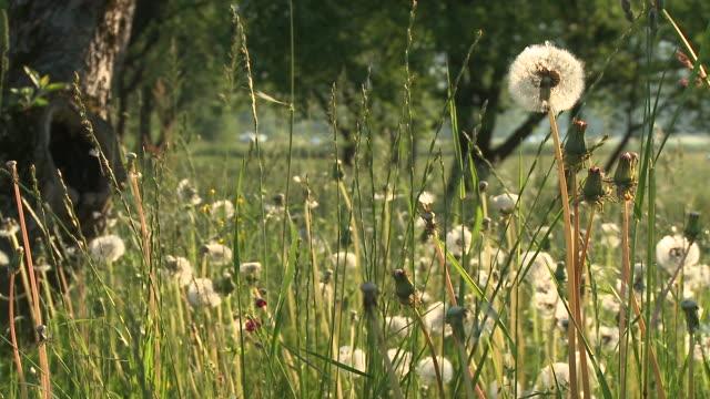 hd: wiese im frühling - wildpflanze stock-videos und b-roll-filmmaterial