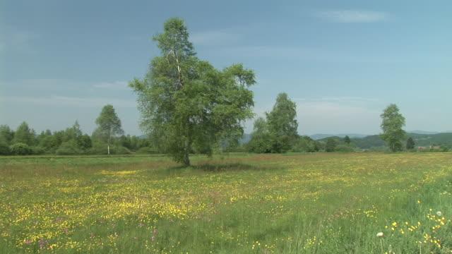 HD: Meadow in spring