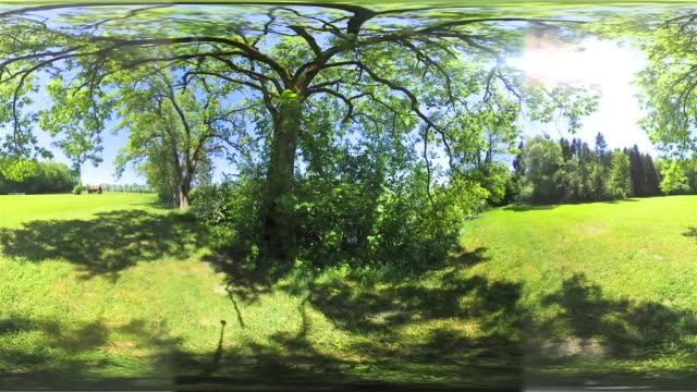 360 VR: Meadow in spring