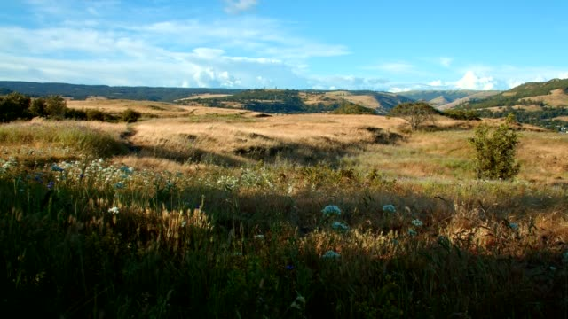 meadow on top of ridge 1 rowena crest columbia river gorge wildflower meadow - 荒野点の映像素材/bロール
