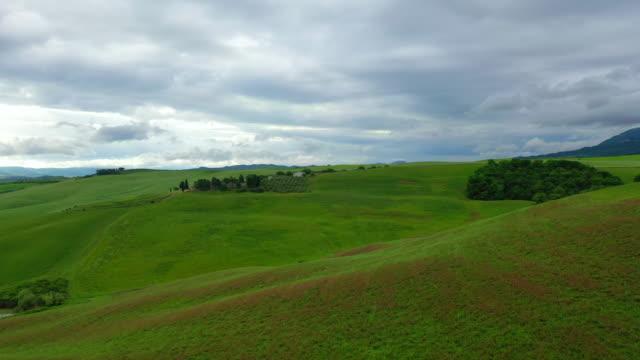 meadow spring scenery / tuscany, italy - prateria zona erbosa video stock e b–roll