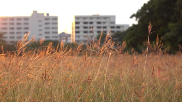 meadow summer with sunlight sunset sky in the city