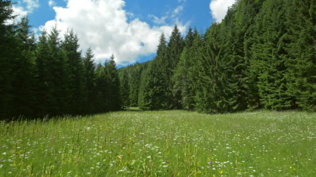 aerial meadow surrounded by fir trees in sunshine - slovenia meadow stock videos & royalty-free footage