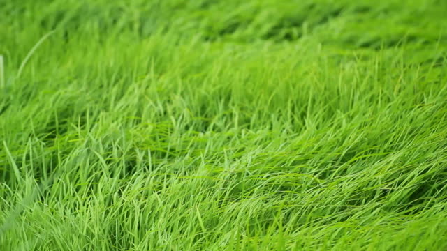 hd: meadow - rack focus stock-videos und b-roll-filmmaterial