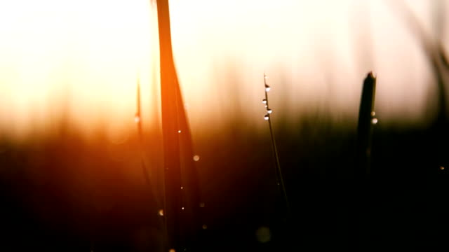 meadow - paddy field stock videos & royalty-free footage