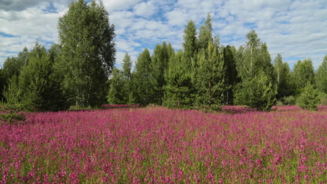 meadow with beautiful wild flowers in the summertime - wildflower stock videos & royalty-free footage